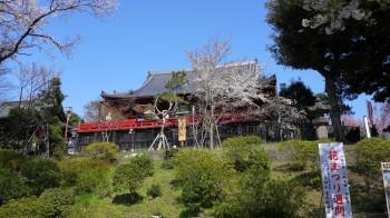 上野清水堂桜