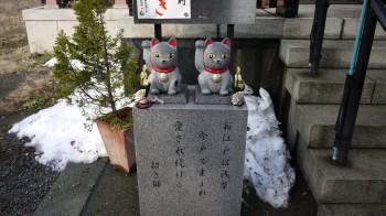 今戸神社猫2