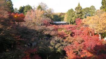 東福寺 通天橋からの紅葉
