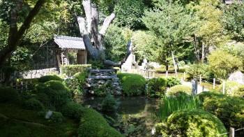 汀の池千円姫小松