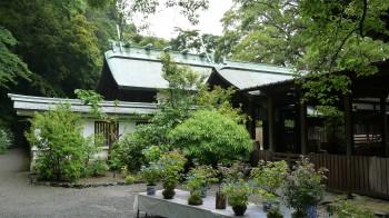 鎌倉宮本殿と八入り山アジサイ