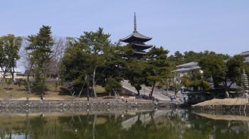 興福寺(猿沢の池)
