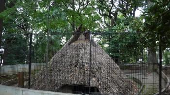 代々木八幡古代住居