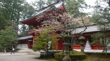 香取神宮光圀桜