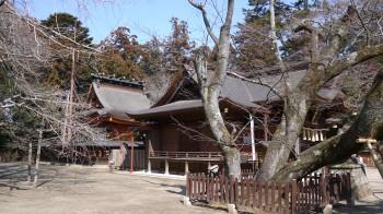 水戸八幡宮右近の桜と本殿