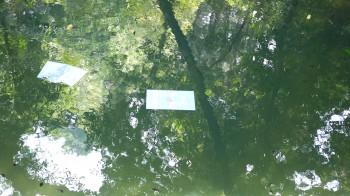 八重垣神社池占い