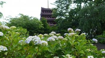本土寺五重の塔