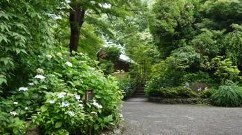 鎌倉宮あじさい道