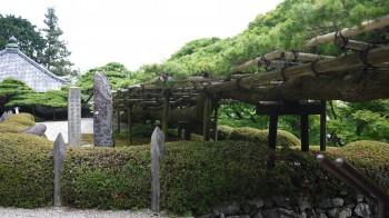 善峯寺遊竜の松