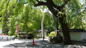 長谷寺石門・枝垂れ桜