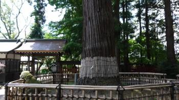 日高神社姥杉正