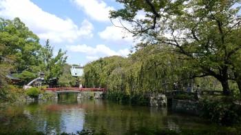 三島大社神池
