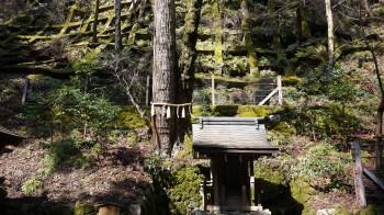 貴船奥宮連理の木(杉と楓)