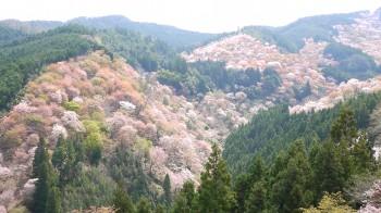 吉水神社から中千本