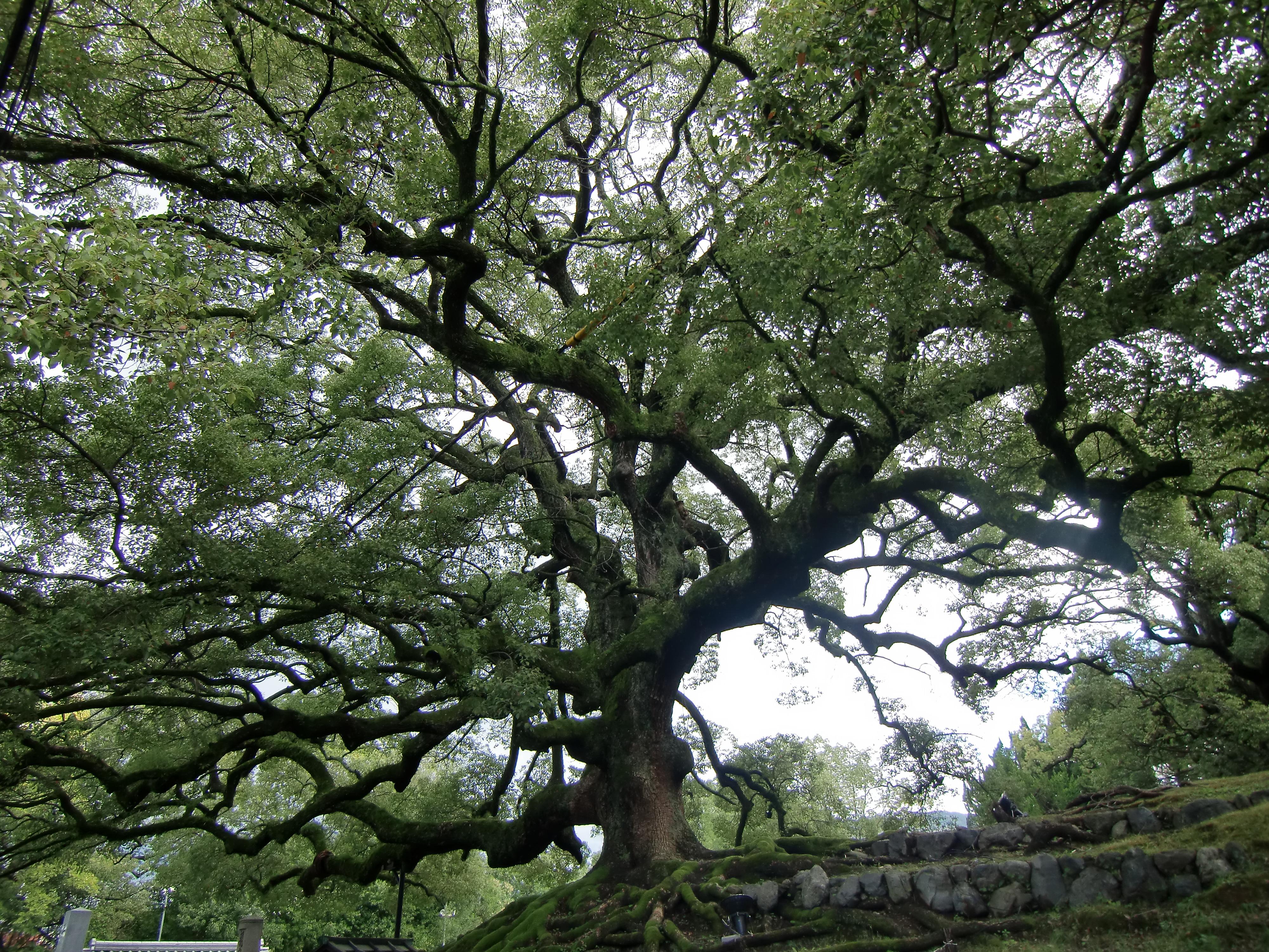 京都 知恩院から高台寺・清水寺 御朱印めぐり | 楽しい御朱印めぐり