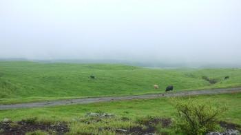 阿蘇草原と牛