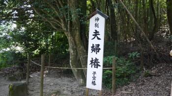 八重垣神社夫婦椿2