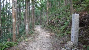 平坦な道が続く古道