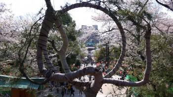 上野清水堂月の松