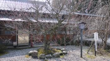 彦根護国神社水戸の梅