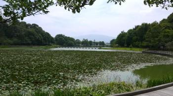 橿原神宮池