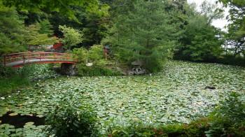 大原野神社蓮池