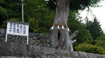 夫婦義神社奇木